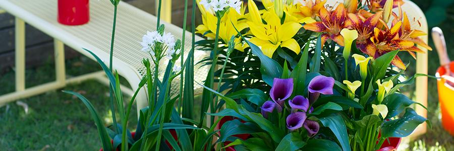 headerjulietuinplant-kopie.jpg